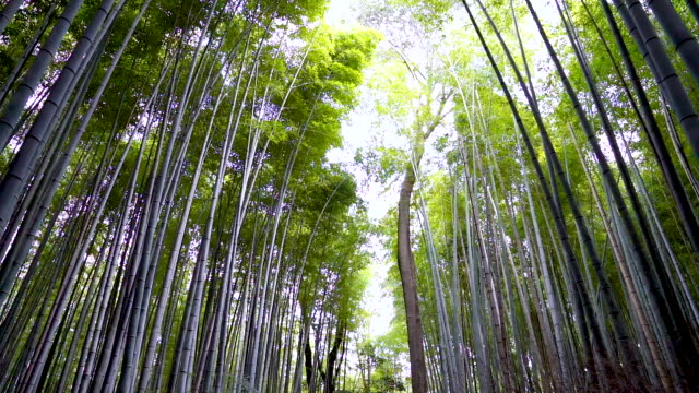 stockvideo's en b-roll-footage met point of view: walking inside the bamboo forest inside arashiyama temple. kyoto, japan. - bamboo plant