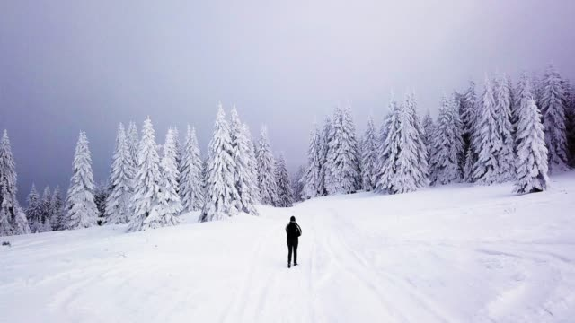 walking into snowy forest - fantasy stock videos & royalty-free footage
