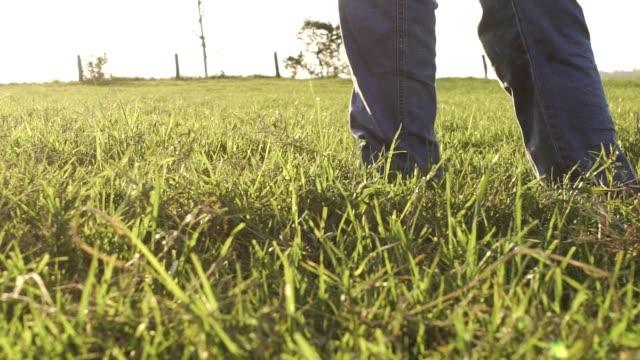 walking man in field - grama stock videos & royalty-free footage