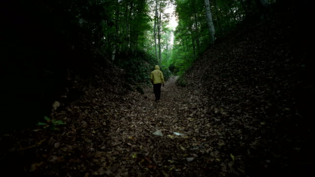 walking man in forest - 4k resolution - racewalking stock videos and b-roll footage