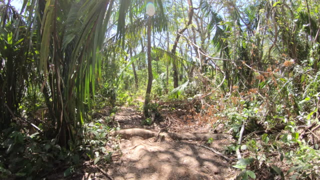 pov of walking on a footpath through the jungle. - slow motion - costa rica stock-videos und b-roll-filmmaterial