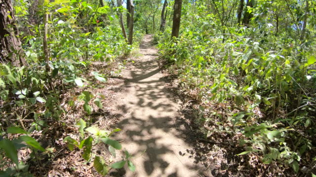 POV of walking on a footpath through the jungle. - Slow Motion