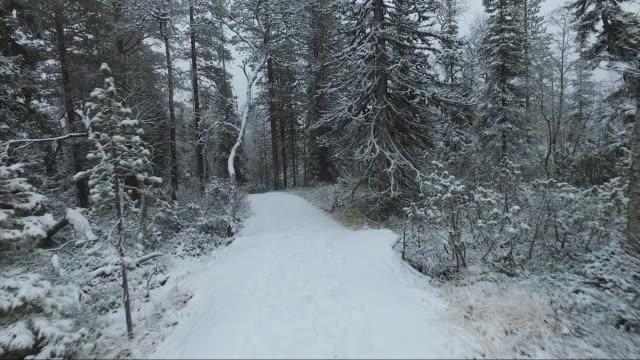 Walking on a snowy path