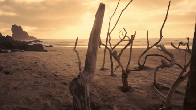 walking on beach. - new zealand culture stock videos and b-roll footage