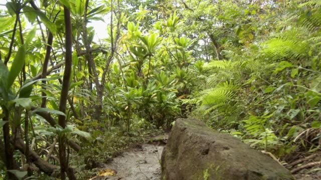 POV Walking on Kalalau Trail, Kauai, Hawaii, USA