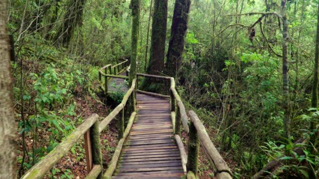 caminar sobre el puente de la senda larga de madera y cubiertas de musgo