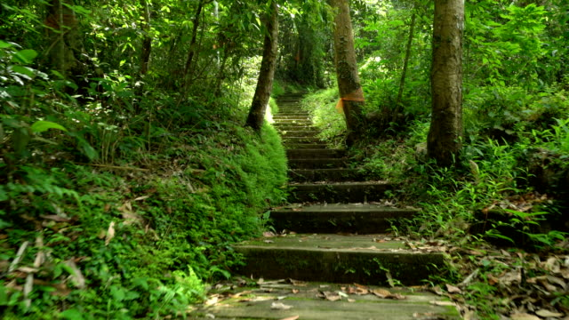 walking on steps in tropical rainforest, northern thailand. - walkway stock videos and b-roll footage
