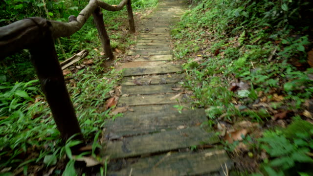walking on steps in tropical rainforest, northern thailand. - staircase stock videos & royalty-free footage