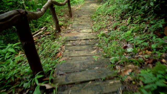 vídeos de stock, filmes e b-roll de andando em passos numa floresta tropical, norte da tailândia. - steps and staircases
