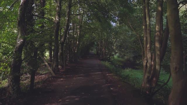 walking on summer countryside morning ,northern ireland - northern ireland stock videos & royalty-free footage