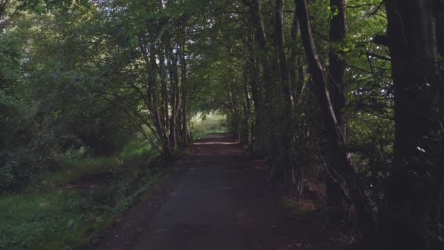 vídeos de stock, filmes e b-roll de andando na manhã do campo do verão, irlanda do norte - estrada em terra batida