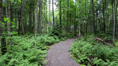 pov walking or hiking in the forest in summer - footpath stock videos & royalty-free footage