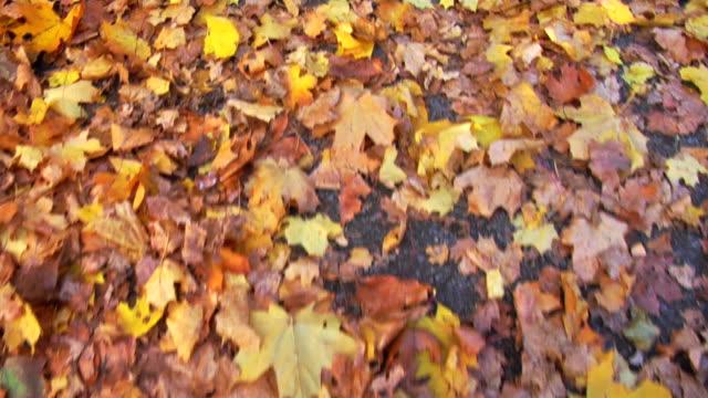 walking over leaves - beige stock videos & royalty-free footage