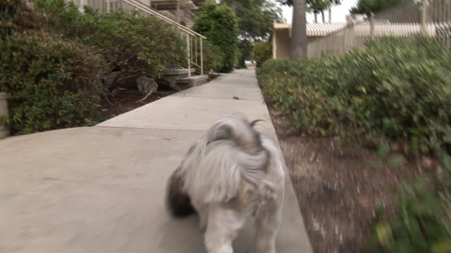 (hd1080i) walking puppy: dog pov / point of view - dog tail stock videos and b-roll footage