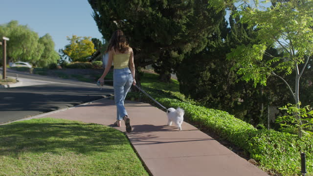 walking the dog - jeans stock videos & royalty-free footage
