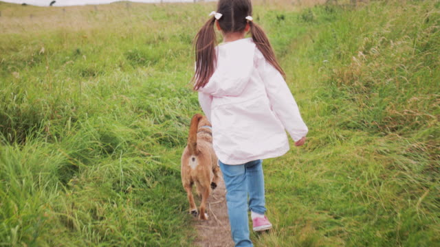 walking the dog - walking point of view stock videos & royalty-free footage