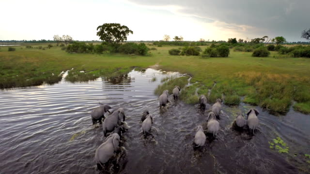 walking though african waters - drone point of view stock videos & royalty-free footage