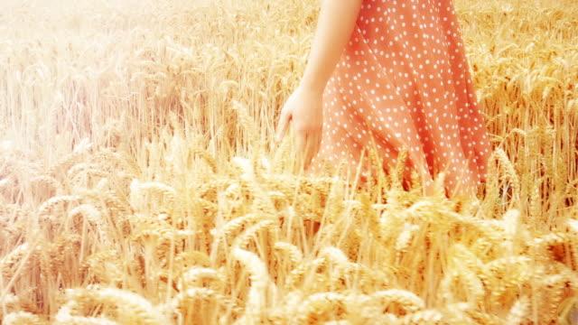 小麦作物に触れる畑を歩く。夏のドレスを着た若い女性。sm。 - 穀草点の映像素材/bロール