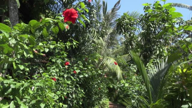 pov / walking through a tropical garden - 雌しべ点の映像素材/bロール