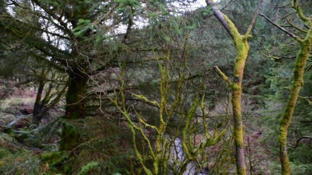 walking through ancient woodland, ayrshire. - david johnson stock videos & royalty-free footage