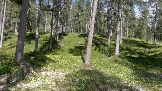 森の奥深くにある葉の中のフォレストを歩いて歩く - とげ点の映像素材/bロール