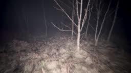 Walking through dark spooky forest at night.