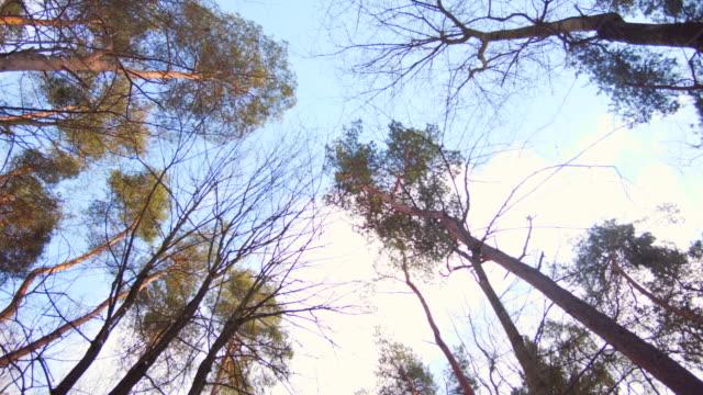 森林を歩くと木の上を見上げる - 梢点の映像素材/bロール