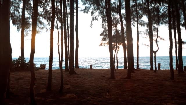 vídeos de stock, filmes e b-roll de andar pela floresta lenta - pinhal