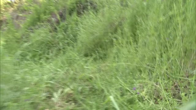pov; walking through grasses, hiroshima, japan - onomichi hiroshima stock videos and b-roll footage