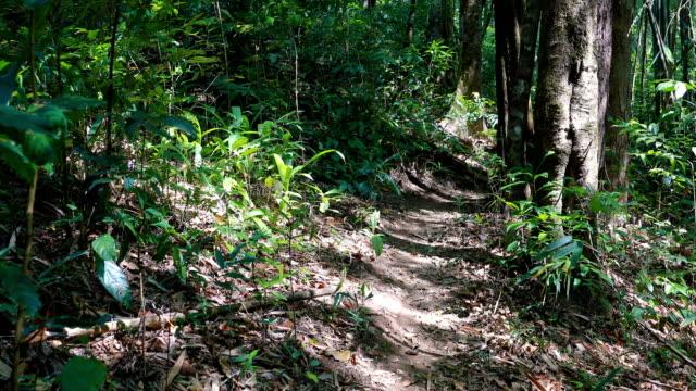 Walking through rainforest in thailand