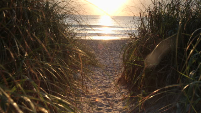 vídeos de stock e filmes b-roll de pov walking through seagrass towards the ocean at sunrise - erva marinha