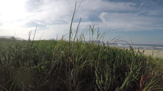 walking through the lush grass on the beach sand - marram grass stock videos and b-roll footage