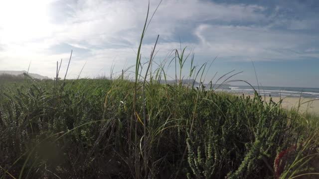 walking through the lush grass on the beach sand - marram grass stock videos & royalty-free footage