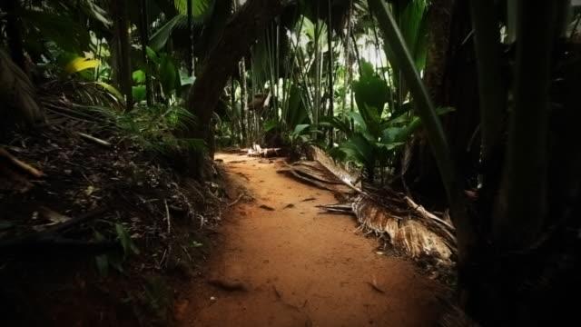 Zu Fuß durch den Regenwald