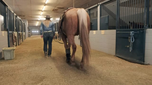 馬小屋を歩く - 雄馬点の映像素材/bロール