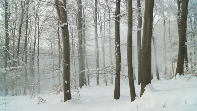 HD STEADYCAM: Walking Through Winter Forest