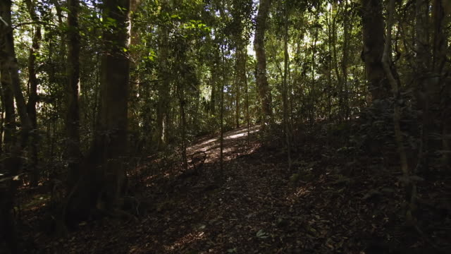 walking with a steady cam through the lamington national park, queensland, australia - solid stock videos & royalty-free footage