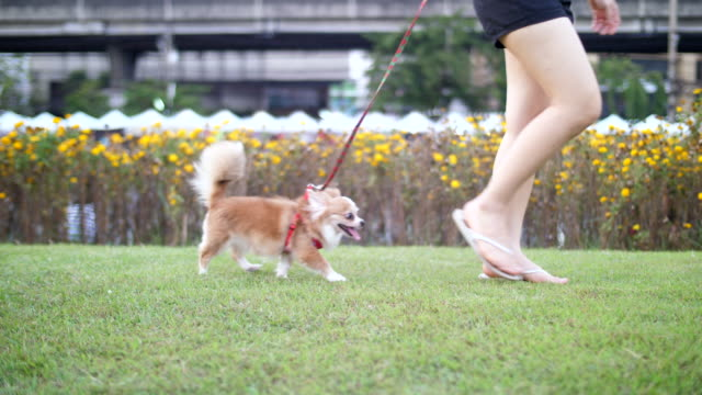 walking with cute dog - pets stock videos and b-roll footage