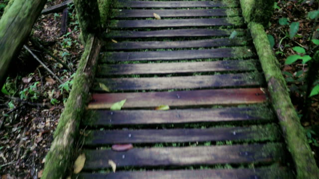 walking with looking down on wooden footpath in tropical forest