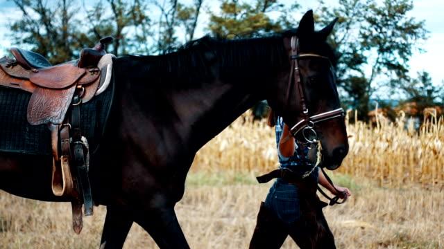 vídeos de stock, filmes e b-roll de andando com meu cavalo em um campo dourado - cavalgar