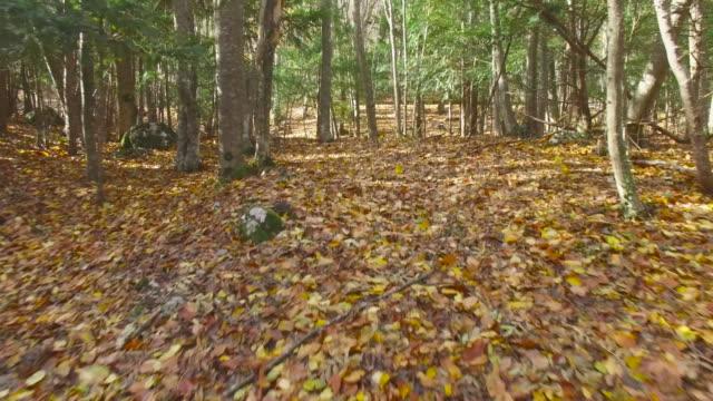 散策にある秋の森