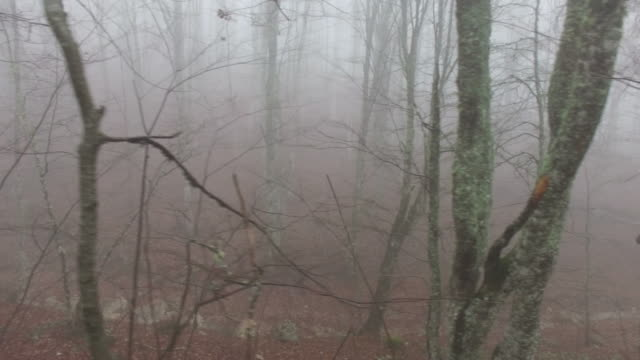 walks in the foggy forest