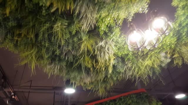 緑の葉と提灯の通路 - ローズマリー点の映像素材/bロール