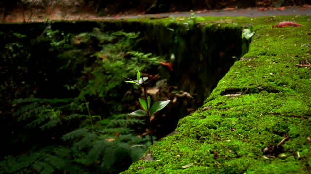wall covered with moss - wet stock videos and b-roll footage