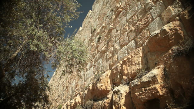 wall of jerusalem with olive tree - judaism stock videos & royalty-free footage