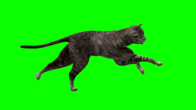 Wallking Cat Green Screen (Loopable)