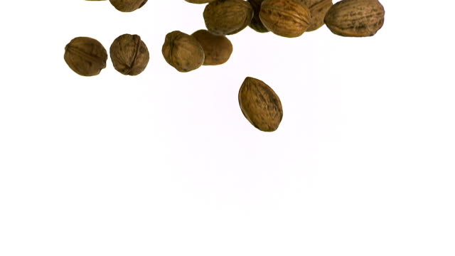 walnut, juglans regia, fruits falling against white background, slow motion - nut food stock videos & royalty-free footage