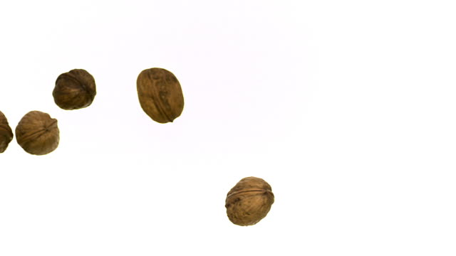 walnut, juglans regia, fruits falling against white background, slow motion - walnut stock videos & royalty-free footage
