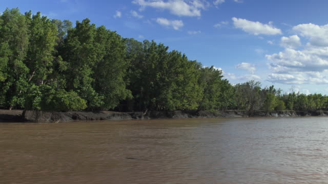 wami river ahead with shoreline on left - wiese stock videos & royalty-free footage