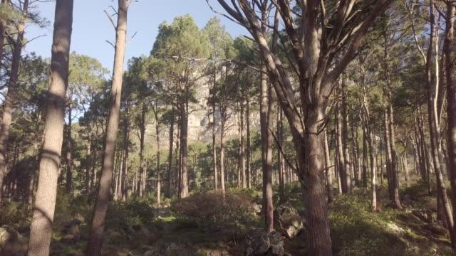 wander often, wonder always - plant bark stock videos and b-roll footage